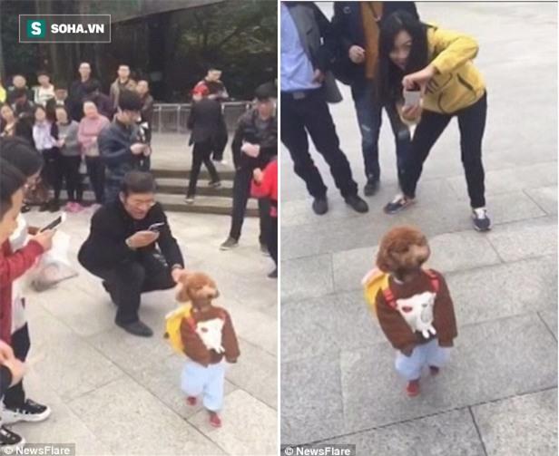Cậu học trò chó nhỏ đeo cặp đi như người suốt 2 km không nghỉ khiến cả con phố náo loạn - Ảnh 3.