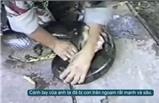 Trăn khổng lồ bất ngờ ngoạm tay người ở Brazil