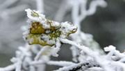 Du khách thích thú ngắm tuyết rơi trắng xóa Mẫu Sơn
