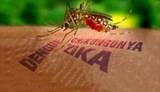 Virus gây teo não thai nhi hoàn toàn có thể xâm nhập Việt Nam