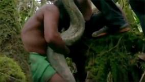 Cận cảnh bắt rắn Anaconda khổng lồ ở rừng Amazon