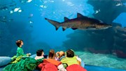 Dịch vụ ngủ với cá mập thu hút khách du lịch