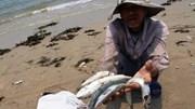 Bộ TN&MT vào Hà Tĩnh làm rõ nguyên nhân cá chết