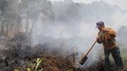 14 hecta rừng ở Cà Mau bị cháy rụi