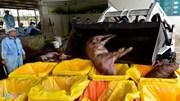 Cảnh tiêu hủy 80 con heo có chất cấm salbutamol
