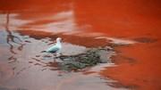 Hiện tượng nước sông Hoàng Mai không phải thủy triều đỏ
