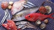 Mẹo phân biệt cá tươi, ươn để tránh ăn phải cá nhiễm độc