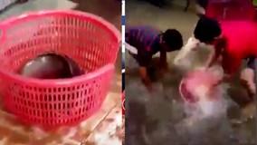 Hà Nội ngập nặng, dân bắt cá 'khủng' trong nhà