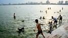 Nắng nóng, dân Hà Nội cho... chó đi tắm Hồ Tây