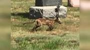 Phát hiện sinh vật lạ nghi quái thú Chupacabra trong nghĩa địa ở Mỹ