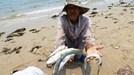 Làm cá chết hàng loạt tại miền Trung, Formosa bồi thường những gì?