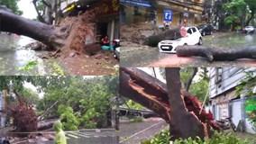 Bão quét tới Hà Nội: Cây đổ hàng loạt, đè nát ô tô
