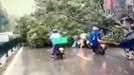 Video cây đổ vào 3 người đi xe máy trên đường Chùa Bộc