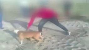 Dân mạng phẫn nộ trước clip bạo hành chó man rợ tại Nam Phi