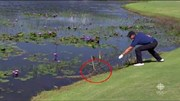 Tay golf cả gan trêu ngươi cá sấu ở Olympic Rio