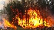 4.000 người sơ tán do cháy rừng ở California