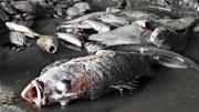 Lý giải nguyên nhân vì sao hải sản miền Trung chưa ăn được