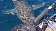 Cá mập trắng tấn công thuyền câu, cắn nát động cơ