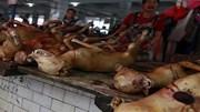 Ăn thịt chó, coi chừng bệnh tả, bệnh dại