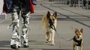 Nỗi ám ảnh chó dữ không rọ mõm trên đường phố Hà Nội