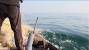 Hải sản tầng nổi trong 20 hải lý có an toàn?