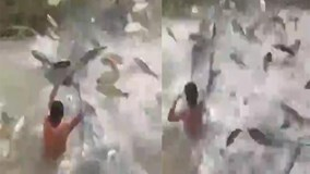 Clip 'cá chép vượt vũ môn' khiến dân mạng kinh ngạc