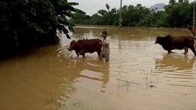 Hơn 4.000 hộ dân Quảng Bình ngập chìm trong lũ