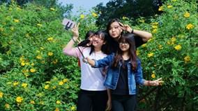 Giới trẻ chen nhau chụp ảnh tại cung đường hoa dã quỳ đẹp nhất Hà Nội