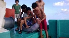 Truy tìm nhóm ngư dân sát hại cá heo ở Phú Quốc