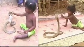 Bé gái Ấn Độ tay không tóm cổ rắn hổ mang chúa