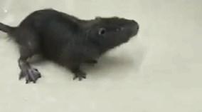 Con vật kỳ lạ khiến dân mạng nhốn nháo cả ngày qua