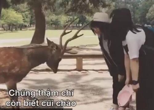clip: nhung chu nai le phep cui chao khi duoc tang thuc an hinh anh 1