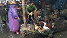 Tại sao trước Tết Đinh Dậu cấm bán, giết mổ gà, vịt sống?