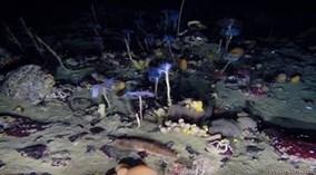 Thế giới dưới nước đầy màu sắc ở biển Nam Cực