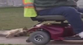 Người đàn ông bị bắt giữ vì buộc chó béc giê sau xe, kéo lê trên vỉa hè