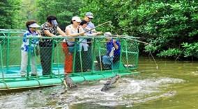 Câu cá sấu đầm lầy ở TP.HCM
