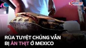 Rùa sắp tuyệt chủng vẫn bị ăn thịt ở Mexico