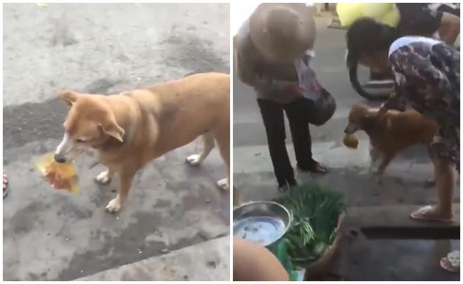 Phò tá chủ nhân đi chợ, chú chó thông minh nhiều người yêu mến - Ảnh 1.