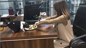 'Chị đại văn phòng' tiết lộ 'ông chủ' công ty qua video làm bít tết siêu lạ