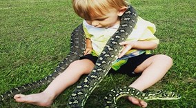Úc: Bé 2 tuổi chưa biết nói đã biết bắt rắn, vật trăn