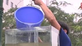 Nhiều người uống nước sông Tô Lịch vẫn khen ngọt và mát