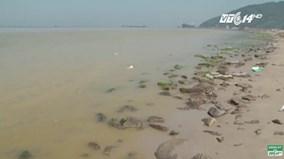 Cá chết, nước chuyển màu vàng đục ở Cảng Chân Mây