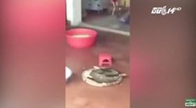 Đình chỉ Hiệu trưởng dọa thả bé 4 tuổi vào máy vặt lông gà