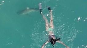 Khoảnh khắc cá mập áp sát cô gái trên biển