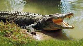 6 cá sấu khét tiếng khổng lồ nhất thế giới