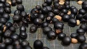 Tận mắt thấy quy trình sản xuất cà phê phân voi đắt nhất hành tinh