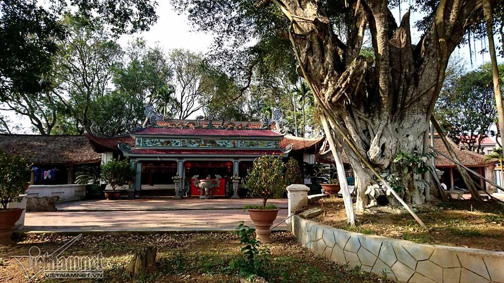 gỗ sưa, cây sưa, sưa đỏ, cây sưa 200 tuổi
