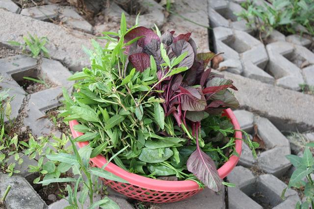 Những rổ rau được người dân hái để chuẩn bị cho bữa cơm chiều