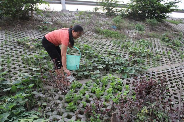Nhờ có vườn rau này mà nhiều hộ gia đình không phải đi mua rau ngoài chợ