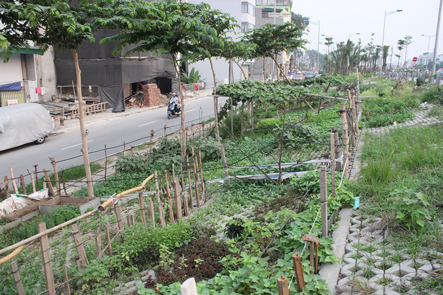 Để phân định ranh giới giữa các vườn, nhiều hộ căng rào, dây thép xung quanh